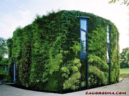 Articles about real estate | House with walls of plants
