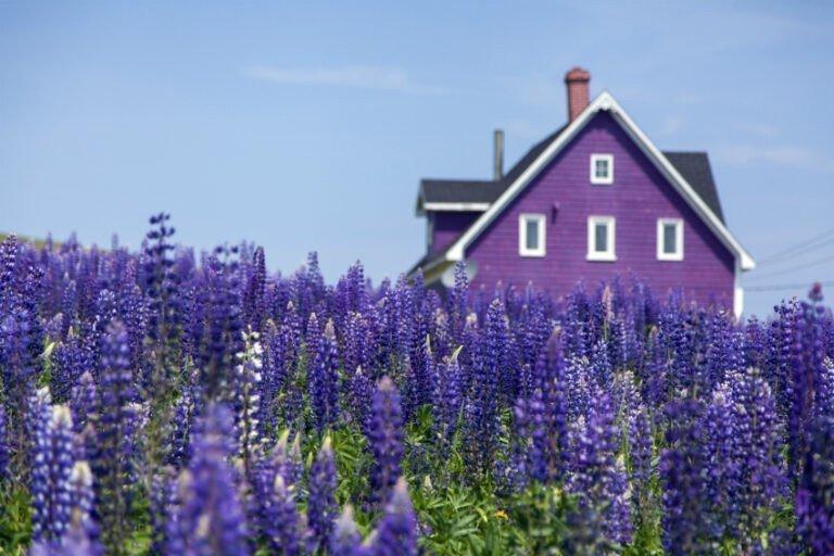 Картинка: Запросы на долгосрочную аренду загородных домов