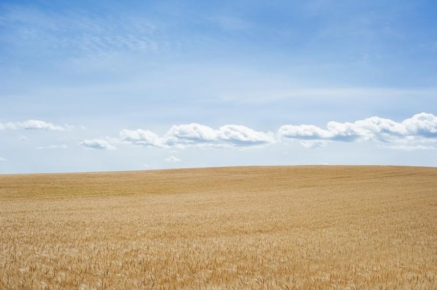 Минэкономики разрабатывает систему мониторинга оборота земель
