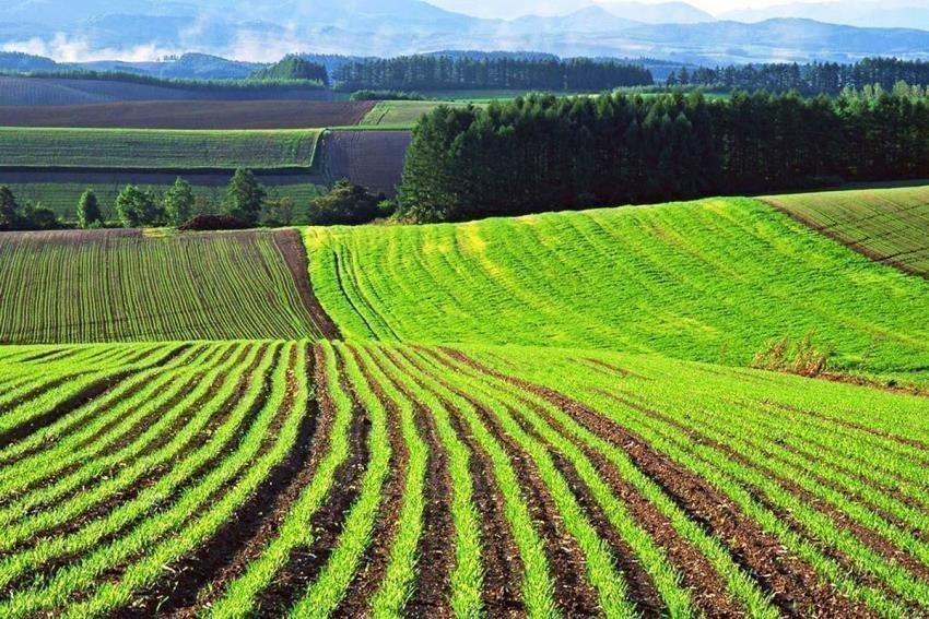 Картинка: Аграрный комитет рекомендует парламенту принять закон о рынке земли