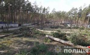 Картинка: незаконная вырубка 60 сосен в Ирпене