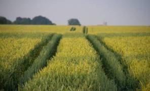 Как можно будет купить землю в Украине