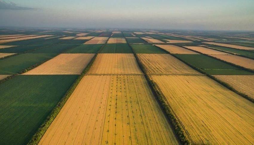 Після відкриття ринку землі ціна на землю може впасти