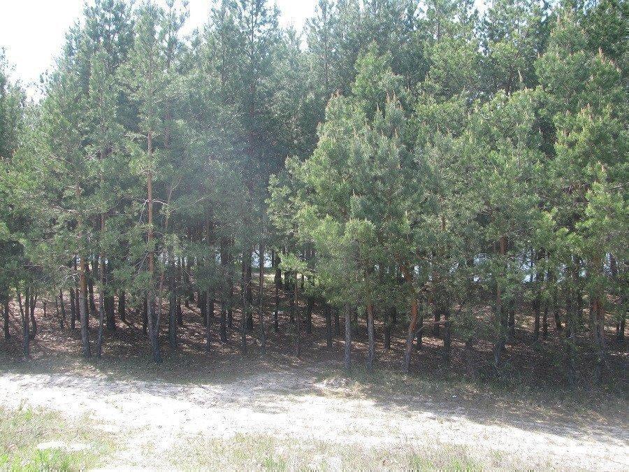Фото: Продам земельну ділянку в місті Новосілки. Оголошення № 5340