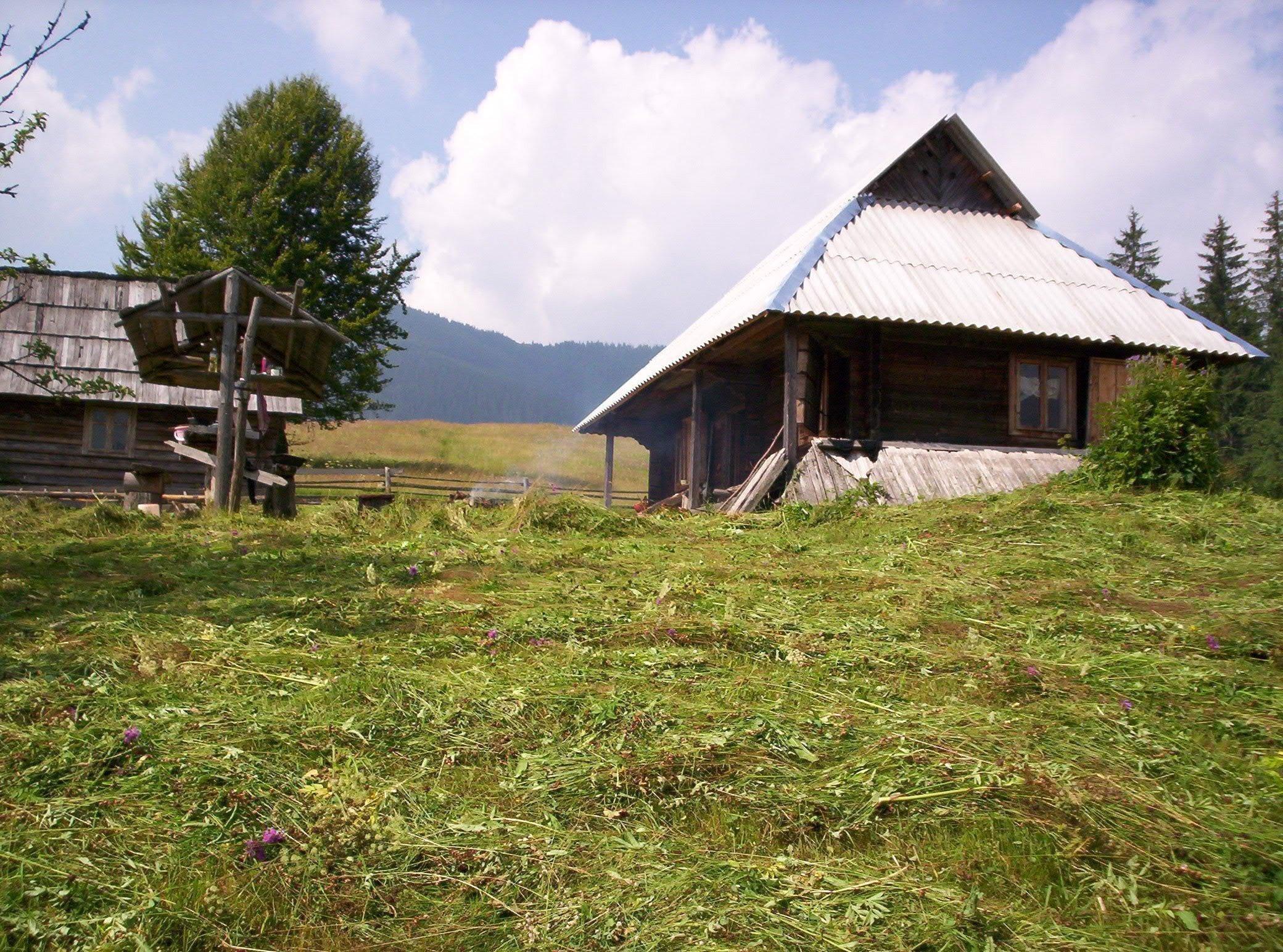 Фото: Продам дом в городе Кривополье. Объявление № 5438