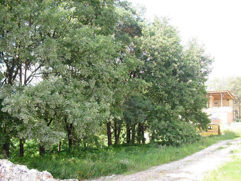 Продам земельный участок в городе Лесники. Объявление № 3580