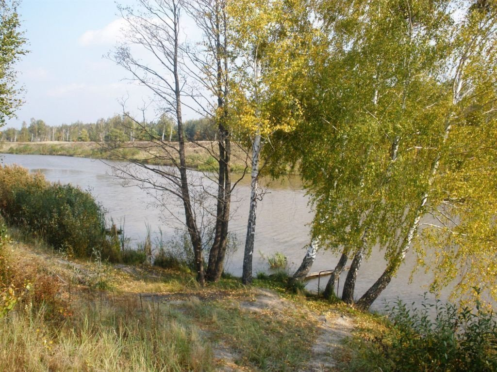 Photo: Sale land in Rovzhi. Announcement № 3717